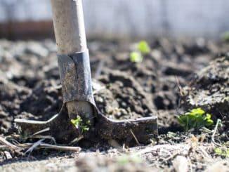 Top 3 firmy ogrodnicze w Krakowie