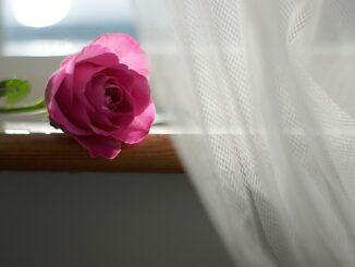 Dekoracja okien wiosną! Na jakie firany się zdecydować?
